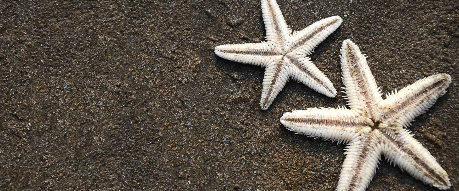 Starfish on Ashvem Beach, Goa