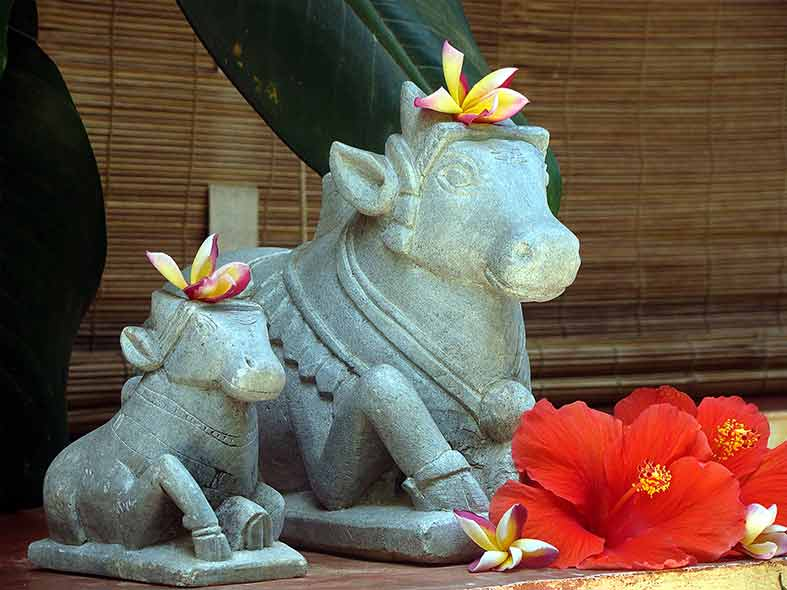 Nandi Bull Sculptures at Rockheart Goa
